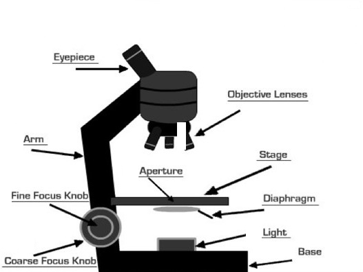 Microscope and its parts medplexus parts of microscope ccuart Images